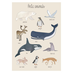 Sebra Plakat - Arctic Animals